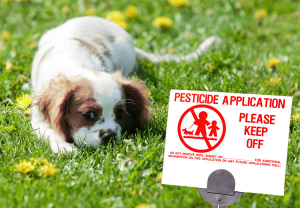 Keep Your Dogs Safe from pesticide