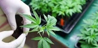 cannabis panel