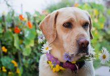 gardening tips for dog