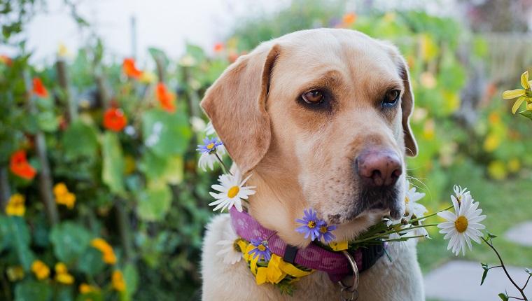 gardening tips for dog
