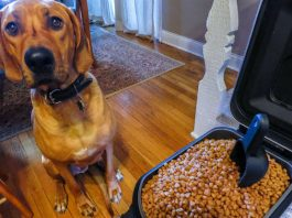 choose Cheep Dog food