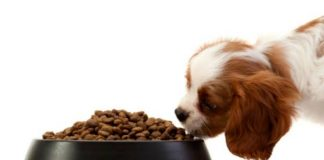 diet puppy food