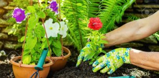 Gardening Be Hands-Free