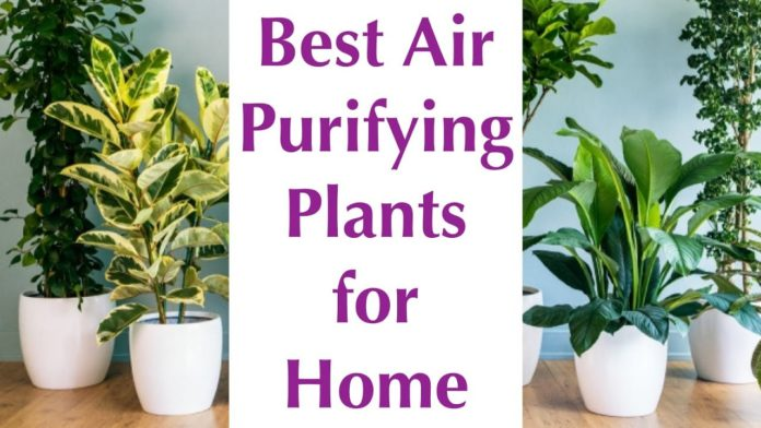 Know About Air-Purifying Plants