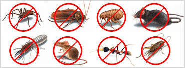 Pests to watch out for in San Antonio, Texas