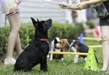 puppy training course